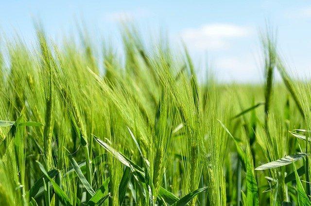 agence web data-datafarm-exploitation-agricole