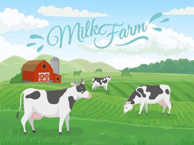 ferme-laitiere